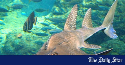 Our local marine megafauna need urgent protection