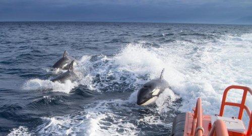 """Mysteriöse """"Killerwal""""-Attacken vor Spaniens Küsten"""