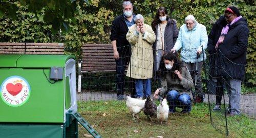 Hühner für den eigenen Garten in Karlsruhe bei Miet 'n Piep mieten