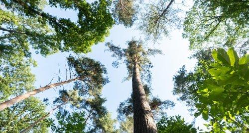 Hohes Interesse an Naturprojekten für Kinder und Jugendliche in Baden-Württemberg