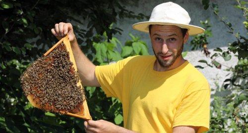 Auch in Karlsruhe wird für Insekten die Nahrungssuche schwierig