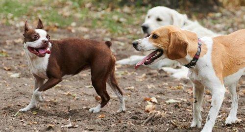 Verwaltung in Bruchsal sucht nach Platz für Hundewiese