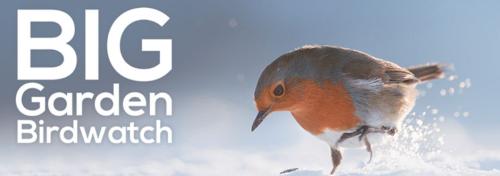 Top 5 Games For RSPB's Big Garden Birdwatch | Zatu Games