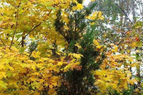 Sunday Morning Photograph September 26 2021: Autumn Has Arrived.