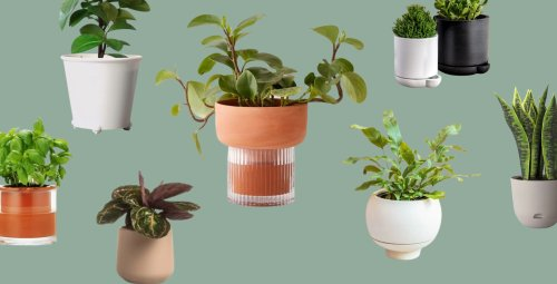 Self-Watering Planters: The Easier Way To Keep Your Plants Hydrated (And Thriving) - Bobby Berk