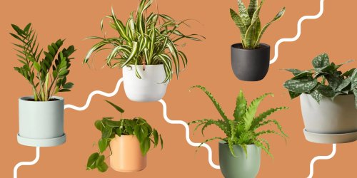 The 6 House Plants That Are Nearly Impossible To Kill (No Matter How Hard You Try) - Bobby Berk
