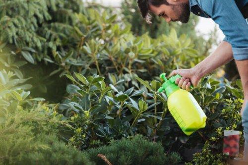 Solved! Does Vinegar Kill Weeds?