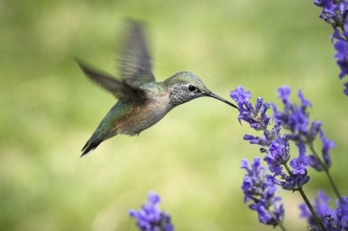 4 Tips for Attracting Hummingbirds