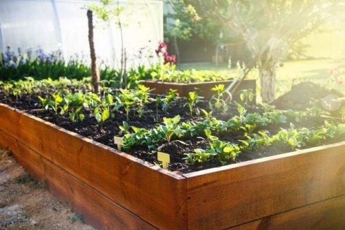 The Best Raised Garden Beds for Backyard Plants