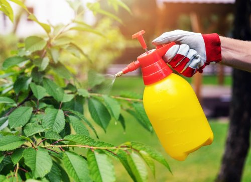 9 Ways That Garden Pesticides May Be Making Your Pest Problem Worse