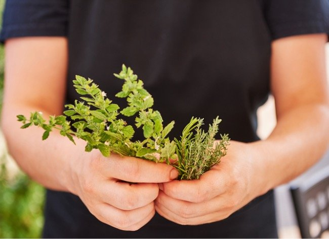 Tired of Your High-Maintenance Turf? 7 Reasons to Consider a Creeping Thyme Lawn