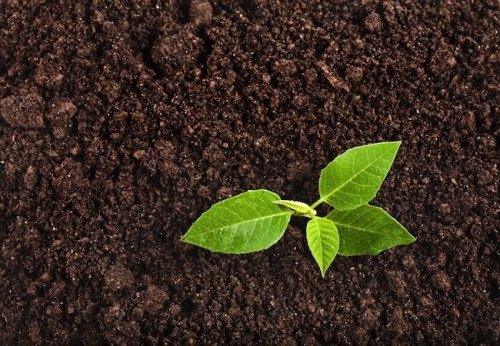 How To: Test Soil pH