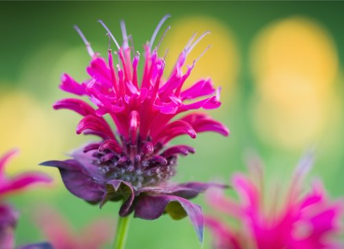 12 Gorgeous Plants That Will Attract Hummingbirds to Your Garden