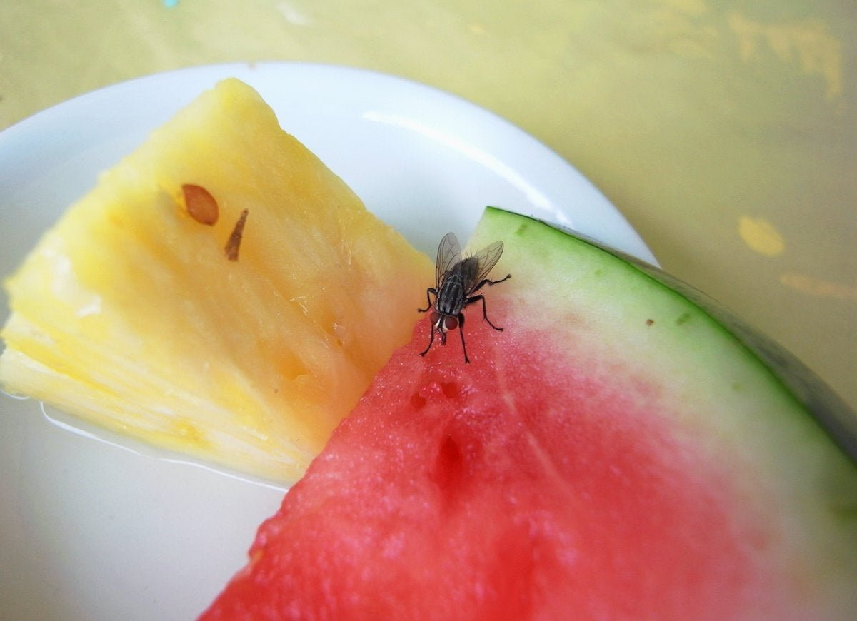 Pests, Be Gone! 11 Natural Ways to Make Your Home Critter-Free