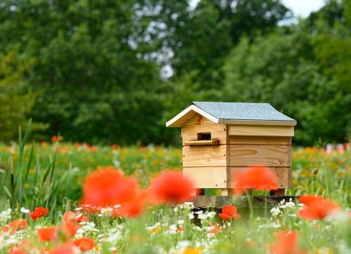 Homemade Honey: How to Keep Bees in Your Own Backyard
