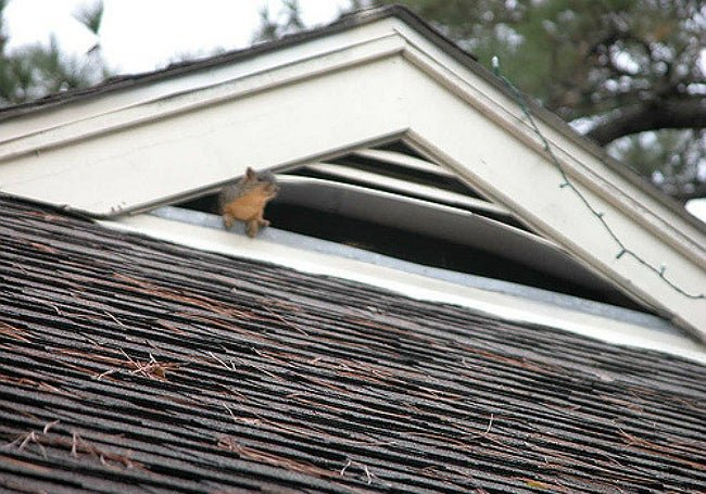 Solved! What to Do About Squirrels in the Attic