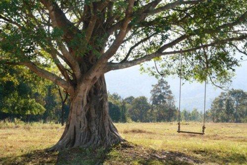The Best Tree Swings for Backyard Fun