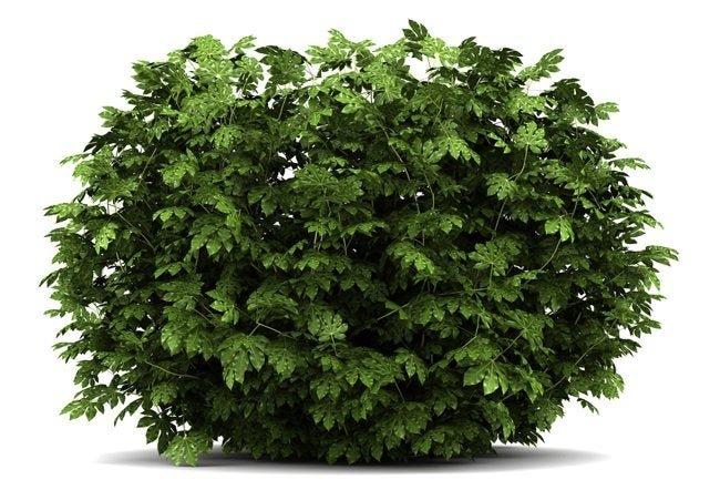 How To: Plant a Bush or Shrub