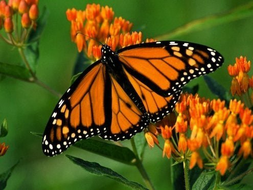 How To: Make a Butterfly Garden