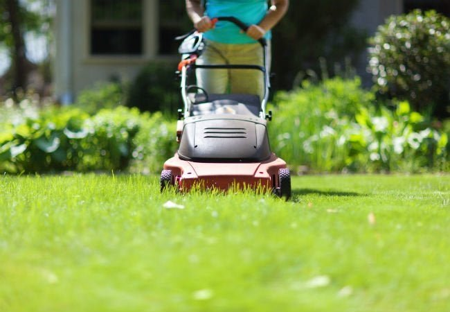 The Best Electric Mowers for Lawn Care
