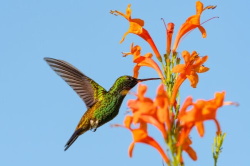6 Incredible Things to Know About Hummingbird Nests
