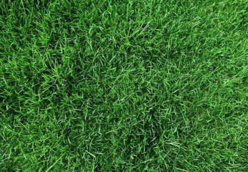 How To: Get Rid of Grass Stains