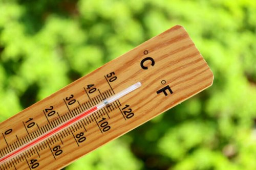 What a Hotter-Than-Average Summer Means for Your Garden This Year