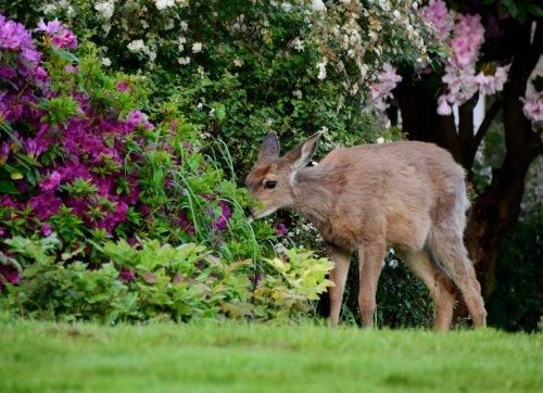 10 Plants Sure to Stop Deer in Their Tracks
