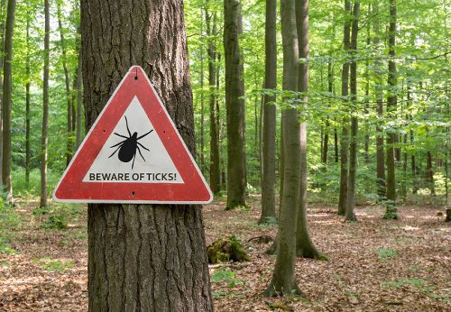 Solved! What to Do When You Find Ticks in the House