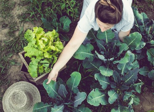 10 Things to Plant Now for Your Fall Vegetable Garden
