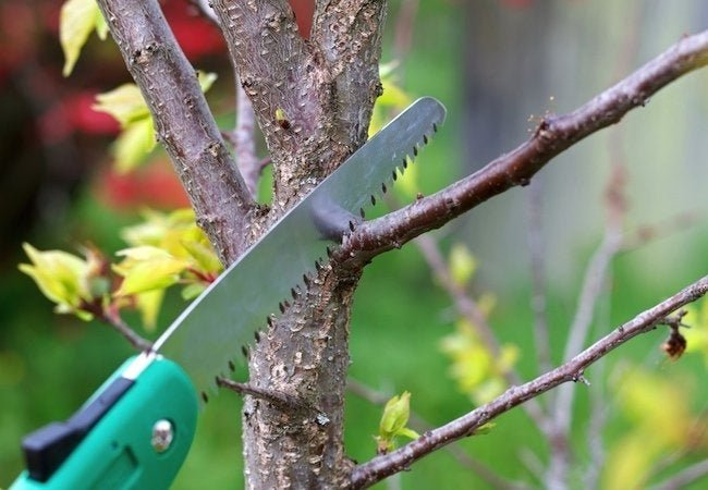 How To: Prune a Tree