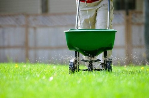 "The Best ""Weed and Feed"" Options for the Lawn"