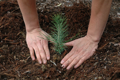 How To: Plant a Tree