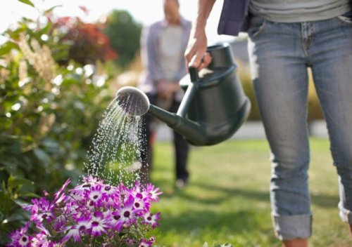 The Dos and Don'ts of Watering Plants