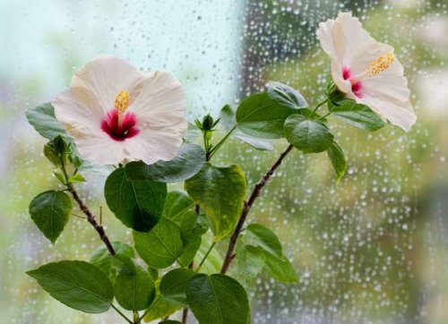 10 Plants You Can Winter Indoors