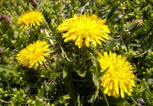 Quick Tip: Control Weeds Using a Propane Torch