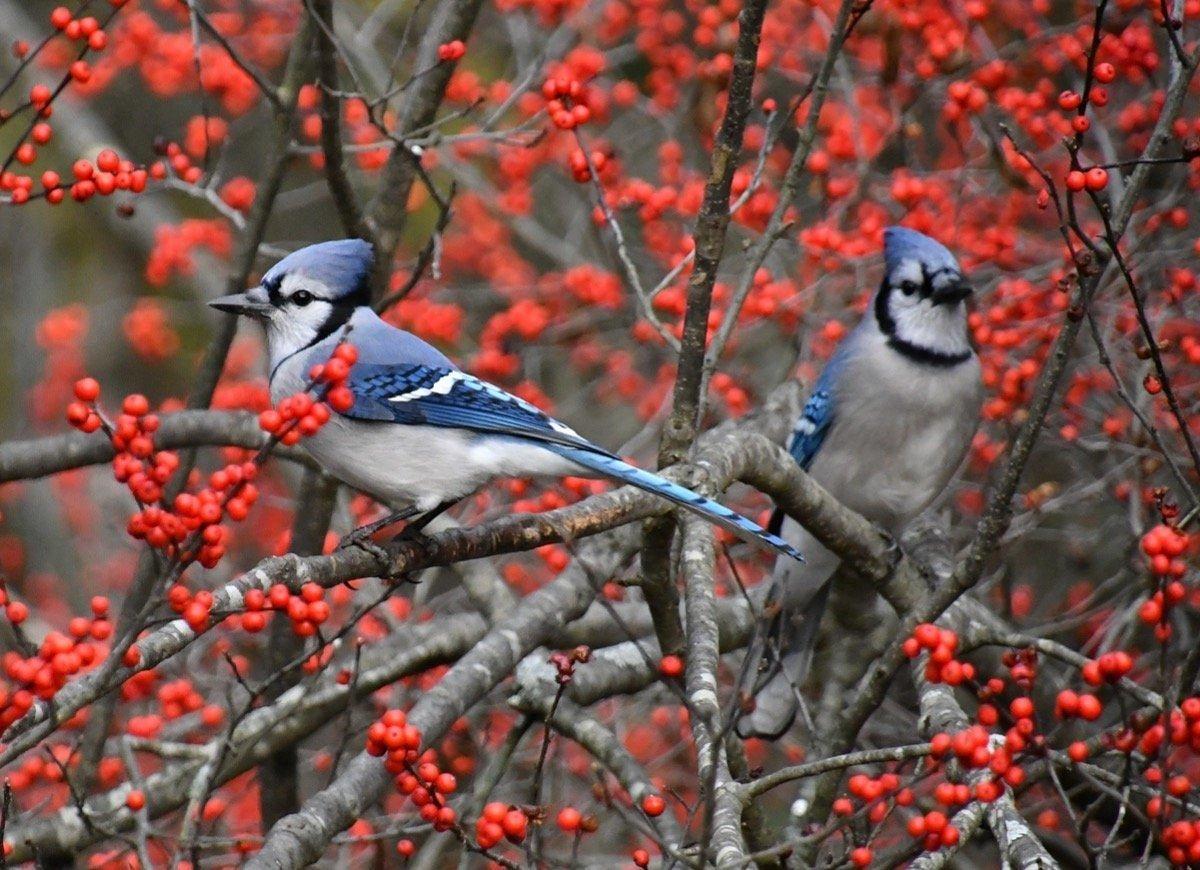 12 Ways to Be a Good Neighbor—to Your Backyard Wildlife