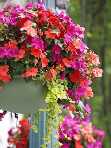 18 Plants Perfect for Hanging Baskets