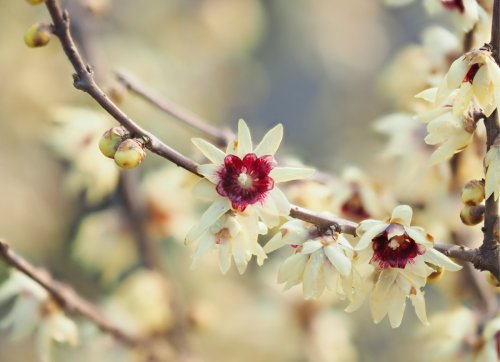 12 Stunning Dwarf Trees Perfect for Big or Small Yards