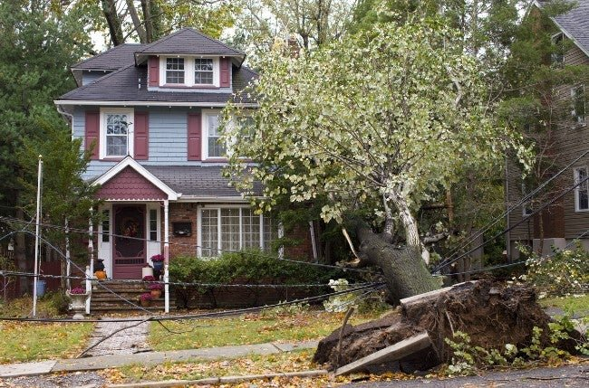 Solved! What to Do When a Tree Falls on Your House