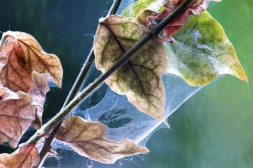 How To: Get Rid of Spider Mites