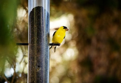 Pro Tips: 5 Ways to Bring Songbirds to Your Backyard