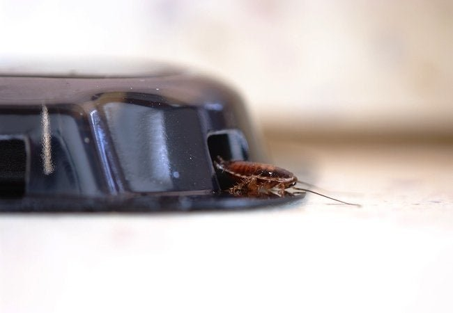 How To: Get Rid of Cockroaches