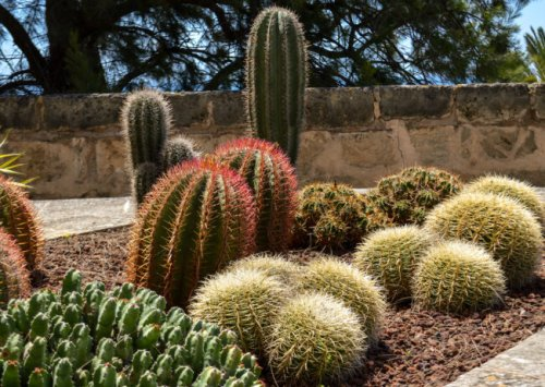 Could a Ban on Ornamental Grasses Aid Water Conservation?