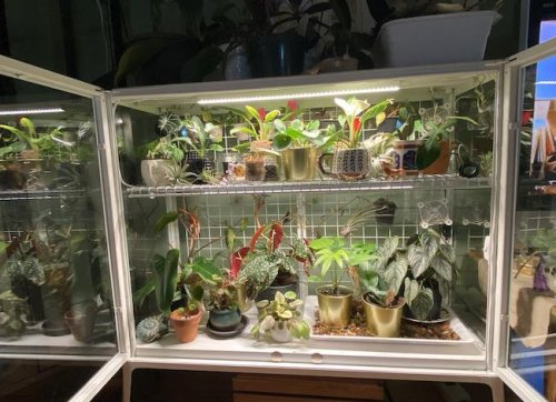 This is the Ultimate IKEA Hack for Plant Parents