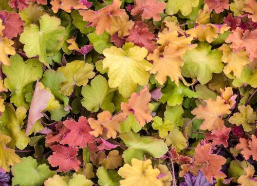 The Best Low-Maintenance Ground Covers for Your Garden