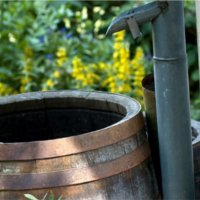 Ways to Save Water in Your Garden