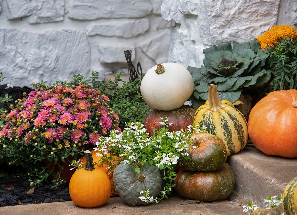 How to Find the Right Plants for Your Fall Garden