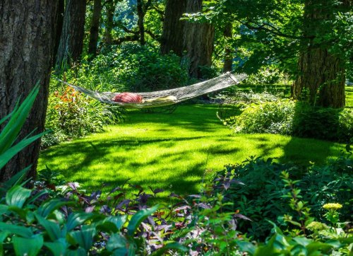 6 Fast-Growing Shade Trees