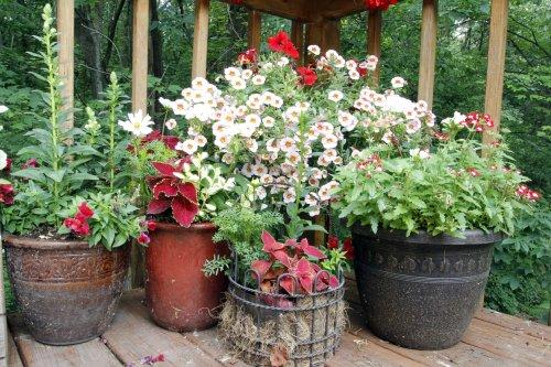 13 Beautiful DIY Flower Pot Ideas for Your Porch or Garden